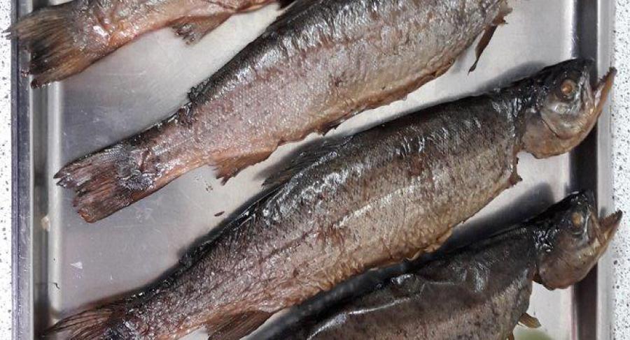 Fischzucht Thalhamer Mühle Familie Kreissig