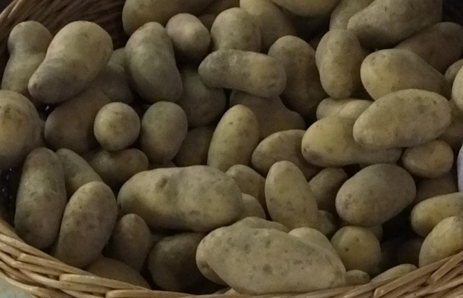 Kartoffelbauer Alscher Rudolf