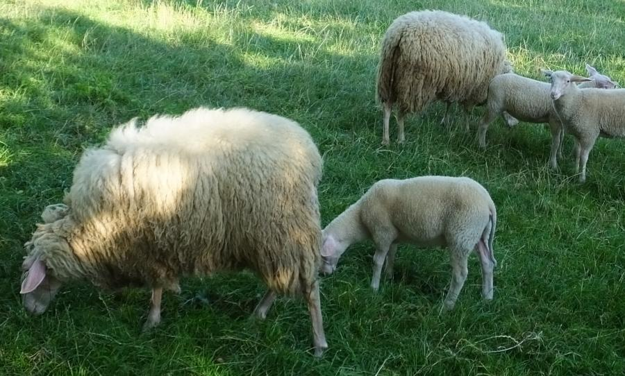 Schafprodukte von Lohmayers