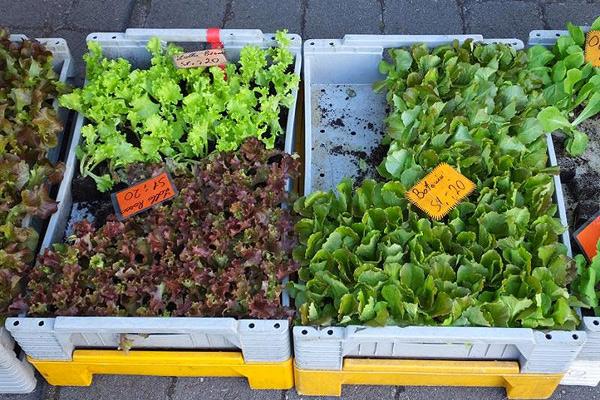 Wendelsteinmarkt Raubling