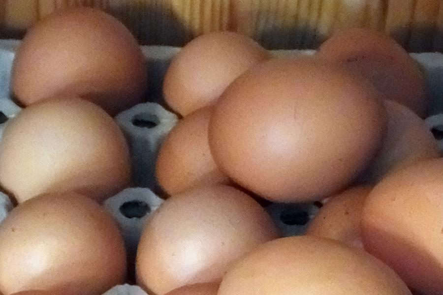 Eier direkt vom Erzeuger