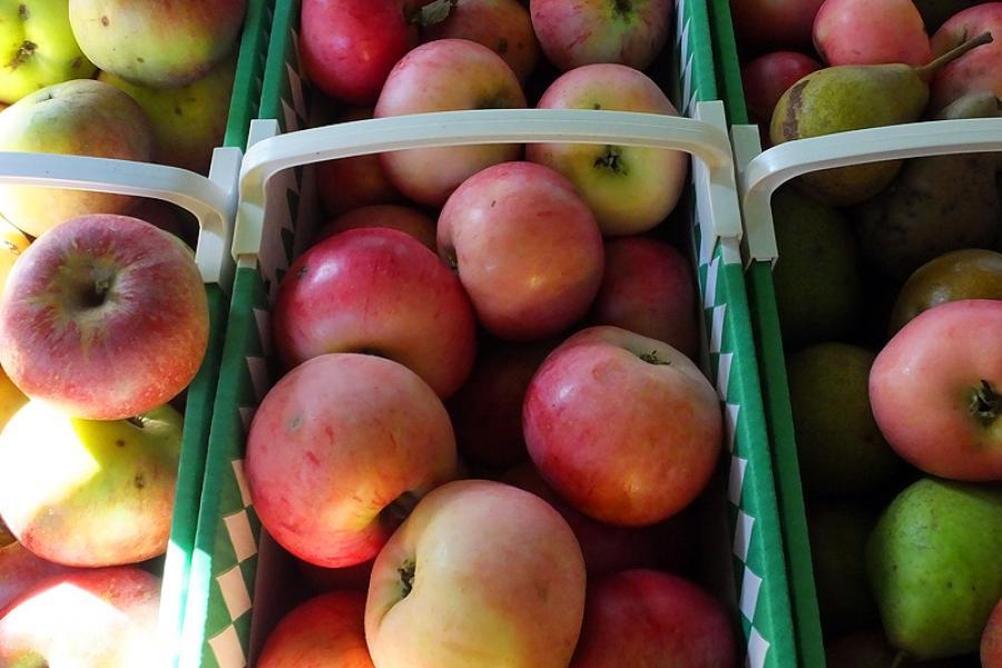 erntefrisches Obst